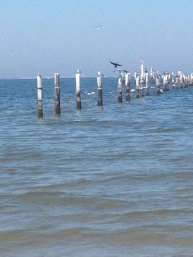 Pound nets and gulls.