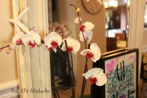 vignette orchids